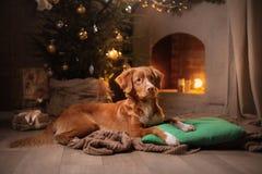 Weinig profiel van de rivierhond Kerstmisseizoen 2017, nieuw jaar Stock Foto