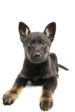 Weinig puppy. royalty-vrije stock foto's