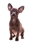 Weinig puppy Royalty-vrije Stock Foto's