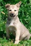 Weinig puppy Royalty-vrije Stock Afbeelding