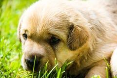 Weinig puppy in de lente royalty-vrije stock foto