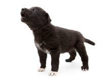 Weinig puppy droevig gehuil royalty-vrije stock fotografie