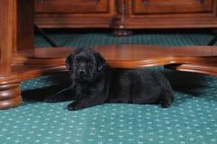 Weinig puppy ligt in het kader van de lijst Stock Fotografie