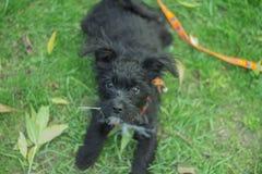 Weinig puppyreserve Royalty-vrije Stock Foto's