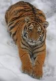 Weinig rij in de sneeuw Royalty-vrije Stock Afbeeldingen