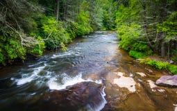 Weinig Rivier, in het Bos van de Staat van Dupont, Noord-Carolina royalty-vrije stock afbeelding