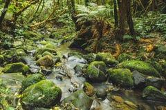 Weinig rivier vloeit door regenwoud in Nieuw Zeeland royalty-vrije stock foto