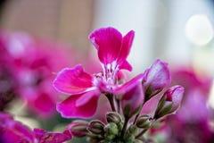 Weinig rode bloem groeit op een struik in het midden van de tuin Royalty-vrije Stock Foto's