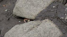 Weinig rode krab onder een rots in Opdrachtstrand, Queensland, Australië stock footage