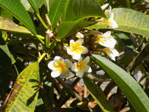 Weinig Romantisch Wit - Gele Bloemen Stock Afbeelding