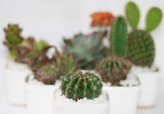 Weinig Ronde Cactus met Doornen royalty-vrije stock afbeeldingen