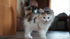 Weinig samengeflanst katje Stock Foto's