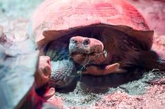 Weinig schildpad die zonnebaadt hebben royalty-vrije stock afbeeldingen