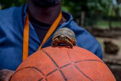 Weinig schildpad stock afbeeldingen