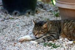 Weinig slaap van de gestreepte katkat op kiezelstenengrond Royalty-vrije Stock Foto's
