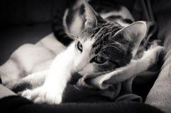 Weinig sleppy kat Stock Foto