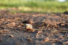 Weinig snelle slak die naar huis kruipen stock afbeelding