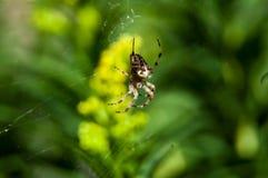 Weinig spin die op diner wachten Stock Afbeeldingen