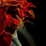 Weinig spin met bloem in nacht Stock Foto