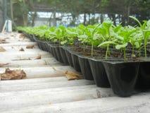 Weinig Spruit in plastic pot in tuin Stock Afbeelding