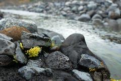 Weinig stuk die van mos binnen - tussen rotsen in Thorsmörk, IJsland groeien stock fotografie