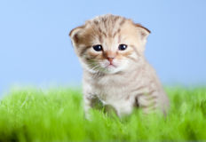 Weinig tabby katje Schot op groen gras royalty-vrije stock fotografie