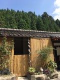 Weinig van de bamboehut en pijnboom bomenbos, Kyoto in de zomer stock foto's