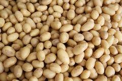 Weinig verse aardappel Stock Fotografie
