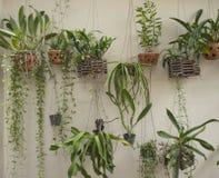 Weinig verticale tuin Royalty-vrije Stock Foto