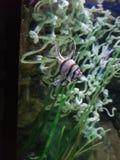 Weinig vis stock afbeelding