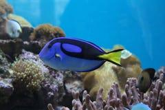 Weinig vis in de koraalriffen royalty-vrije stock fotografie