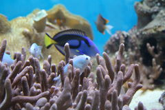 Weinig vis in de koraalriffen royalty-vrije stock afbeeldingen