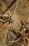 Weinig vliegzitting op gras Close-up Stock Foto