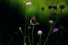 Weinig vlinder royalty-vrije stock foto