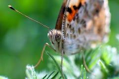 Weinig vlinder op een bloem, Macro Royalty-vrije Stock Afbeeldingen