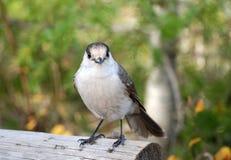 Weinig vogel royalty-vrije stock foto's