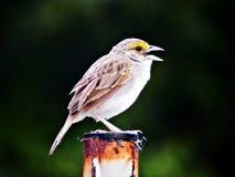 Weinig vogel het zingen en het isn de nacht van ` t stock fotografie