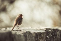 Weinig vogel klaar op te stijgen stock foto's