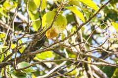 Weinig vogel op boom Stock Fotografie