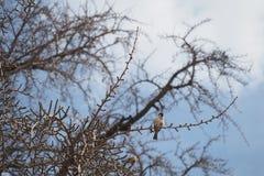 Weinig vogel op een tak Royalty-vrije Stock Fotografie