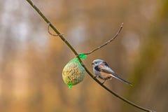 Weinig vogel op tak royalty-vrije stock fotografie
