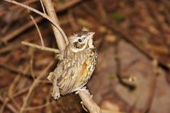 Weinig vogeltje op de tak van boom Stock Afbeeldingen