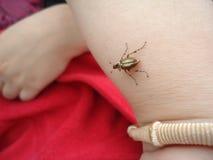 Weinig vriendschappelijk insect stock fotografie