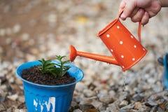 Weinig waggelt jongenshand het water geven installaties met oranje gieter stock fotografie