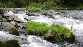 Weinig waterval in rivieroeverbos bij de rivier van Donau stock videobeelden