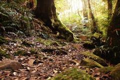 Weinig weg in Australisch regenwoud Royalty-vrije Stock Afbeeldingen