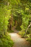 Weinig weg in het bos Stock Foto's