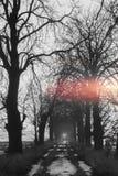Weinig weg met bomen en licht aan het eind Stock Fotografie
