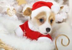 Weinig Wels puppy van Corgi Pembroke in een Kerstmankostuum royalty-vrije stock foto's