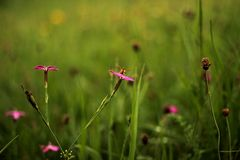 Weinig wesp zit op de bloem Stock Foto